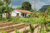 Typical rural house at the Vinales valley in Cuba — Photo