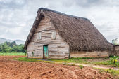 Tobacco curing barn in Pinar del Rio, Cuba — Photo