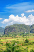 The Vinales valley in Cuba — Stock Photo