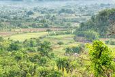 Plantations and tobacco barns at the Vinales Valley in Cuba — Stock Photo