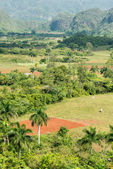 Agriculture at the Vinales Valley in Cuba — Stock Photo