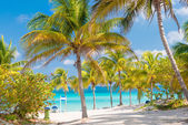 Coconut palms and white sandy beach in Cuba — Stock Photo