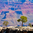 Stock Photo: Tree on rock in front of Grand Canyon, Arizona, USA