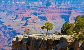Tree on a rock in front of Grand Canyon, Arizona, USA — Stock Photo