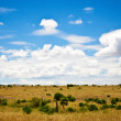 Africlandscape , Maasai Mara, Kenya — Stock Photo #17640975