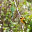 Foto Stock: Pair Of Bee-Eaters In Maasai Mara, Kenya