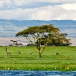 Beautiful Africlandscape, Lake Naivasha, Kenya — Stock Photo #17642795