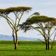 Beautiful Africlandscape at Lake Naivasha, Kenya — Stock Photo #17642927