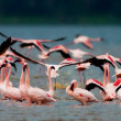 Flamingos at Lake Nakuru, Kenya — Stock Photo