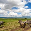 Zebras in the Ngorongoro Crater, Tanzania - Stock Photo