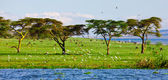 Beautiful African landscape, Lake Naivasha, Kenya — Stock Photo