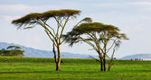 Beautiful African landscape at Lake Naivasha, Kenya — Stock Photo