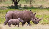 White rhinoceros or square-lipped rhinoceros (Ceratotherium simum) with her baby in Lake Nakuru National Park, Kenya. — Stock Photo