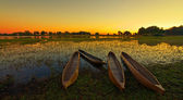Sunrise over the Okavango Delta, Botswana — Stock Photo