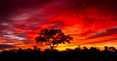 African sunset in the Kruger National Park, South Africa — Stock Photo
