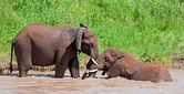 African elephants having a bath in a river in the Tarangire National Park, Tanzania — Stock Photo