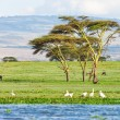 Stock Photo: Lake in savanna