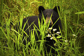 Female Black Bear and Cub — Stock Photo