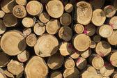 Logs de madeira — Fotografia Stock