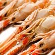 Fresh Scampi - Stock Photo