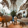 LONDON, UNITED KINGDOM - MARCH 03: Interior view of Natural Hist — Stock Photo #12238084