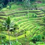 verbazingwekkende rijst terras veld, ubud, bali, Indonesië — Stockfoto #12238799
