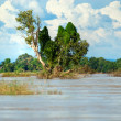 Tree on Mekong river. — Stock Photo #12420325