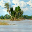 Stock Photo: Tree on Mekong river.
