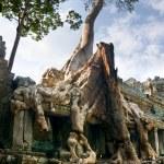 Big Tree at Preah Khan Temple, Angkor Wat, cambodia. — Zdjęcie stockowe