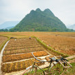 North Vietnamese Landscape. — Stock Photo