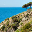 Beautiful coastlines in Elba island. - Stock Photo