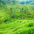 Stock Photo: Amazing Rice Terrace field, Ubud, Bali, Indonesia.