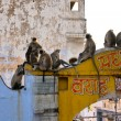 Stock Photo: Monkeys in Jaipur, India.