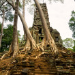 Old Temple and big Tree at Angkor Thom, Siem Reap, Cambodia. — Stock Photo