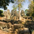 Big Tree at Preah Khan Temple, Angkor Wat, Cambodia. — Stock Photo