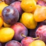 Basket of fruits, yellow and purple plum. — Stock Photo