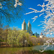 Central park, New York City. USA. - Stock Photo