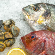 Stock Photo: Seafood on ice at fish market