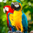 Colorful blue parrot macaw — Stock Photo