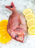 Seafood on ice at the fish market — Stock Photo