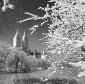 Central Park, New York City, USA. — Stock Photo
