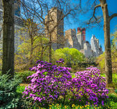 Central park, New York City. USA. — Stock Photo