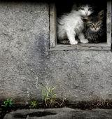 Stray Wet Kittens — Stock Photo
