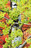 Herbst birkenblätter — Stockfoto