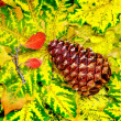 Stock Photo: Pine Cone and Fall Leaves