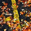 Stock Photo: Fall Leaves on Road