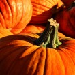 Pumpkin Pile - Stock Photo