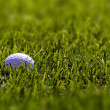 Golf Ball on Fairway — Stock Photo