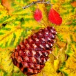 Pine Cone and Fall Leaves — Stock Photo #14553441