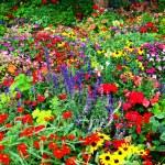 Flower Garden — Stock Photo #14703305
